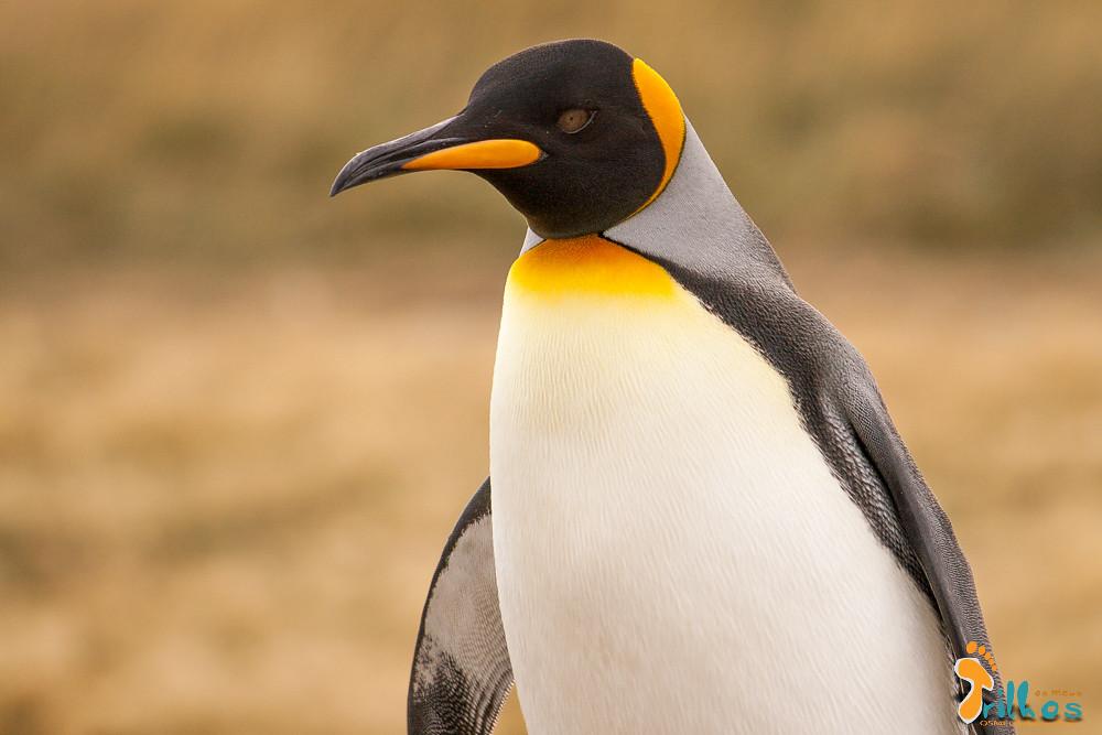 parque-pinguim-rei-4