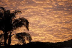 Firey.... (Joe Hengel) Tags: socal southerncalifornia sanjuancapistrano sunrise morning morninglight goodmorning coraltree palmtree palm palmfronds california clouds ca cloudsstormssunsetssunrises cloudsorangecounty cloudy firey inferno goldenstate glow berm hill silhouette silhouettes wintermorning wintersky winter