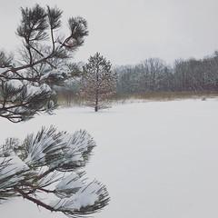 Snow finally.