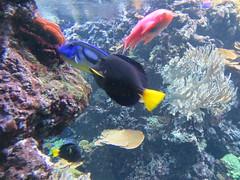 00734914 Aquarium Berlin 1 - 2017 (golli43) Tags: aquariumberlin zoo fische krokodile quallen wasser wasserpflanzen amphibien insekten unterwasserwelt