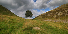 Sycamore Gap (Andy Watson1) Tags: sycamore gap northumberland hadrians wall national park england september summer tree lonely lone loner person hills sky blue clouds grass green uk united kingdom great britain british english landscape view scenery scenic light rock trip coutryside travel canon 70d sigma nature day bright sunshine