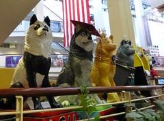 Lineup (Lorianne DiSabato) Tags: college boston campus ma husky nu massachusetts huskies brawn northeastern northeasternuniversity bostonrhetoricandwritingnetwork brawnsummerinstitute