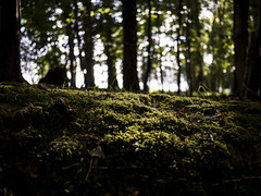 Losing Light (DanRSmith) Tags: wood light shadow woodland dark woods bokeh bokehlicious panasonic20mmf17 olympusepl5