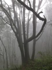 Pista Monte del Agua (Zruda) Tags: fog clouds geotagged spain canarias tenerife esp belmontebajo herjosdeltanque geo:lat=2832716138 geo:lon=1681265860