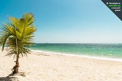 Palmera pequeña en la Playa de San Luis en San Andrés Isla