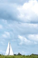 Islandview - Tiengemeten-17 (Cees Nekeman) Tags: plants nature netherlands dutch animals canon landscape island tiere hiking wandelen natur pflanzen nederland natuur insel biking environment wilderness paysage landschaft dieren paysbas haringvliet wandern planten fietsen landschap niederlande environnement eiland nieuwendijk umwelt natuurmonumenten 6d zuidholland le lanature radfahren schotsehooglander milieu natuurgebied tiengemeten wildnis wildernis staatsbosbeheer scottishhighlander zuidbeijerland islandview korendijk canon6d lesanimaux levlo rgionsauvage lesplantes vuilegat hitsertschegat larandonne upc0614