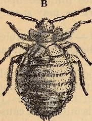 Anglų lietuvių žodynas. Žodis spiny-headed worm reiškia spygliuota-vadovauja kirminas lietuviškai.