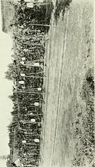 Anglų lietuvių žodynas. Žodis cotton-seed tree reiškia medvilnės sėklų medis lietuviškai.