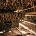 """Vinales tobacco drying shed • <a style=""""font-size:0.8em;"""" href=""""https://www.flickr.com/photos/40181681@N02/14597464249/"""" target=""""_blank"""">View on Flickr</a>"""