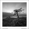 Wind Bent (Ilan Shacham) Tags: sea blackandwhite bw tree water sunrise square landscape israel view fineart galilee special minimalism twisted fineartphotography seaofgalilee disfigured poriya