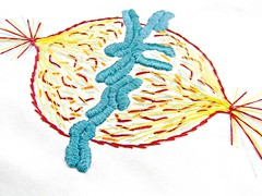 Mitotic Spindle Embroidery (Hey Paul Studios) Tags: embroidery anatomy biology microbiology genetics gender mitosis chromosome sexcells medicalart mitoticspindle anatomicalart sciencediagram