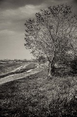 A lonely tree (Vid Vrbanovic) Tags: road white black tree water grass river landscape stream earth horizon dirt stupnik