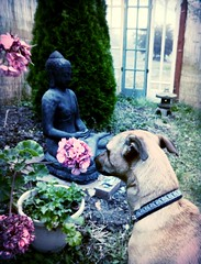 Facing flowers - Still life with Rosie, Buddha, early A Garden for the Buddha, fence, windows, Japanese Lantern, fog, Seattle, Washington, USA (Wonderlane) Tags: seattle flowers windows usa fog fence washington buddha facing japaneselantern dscn1306 facingflowersstilllifewithrosie stilllifewithrosie earlyagardenforthebuddha