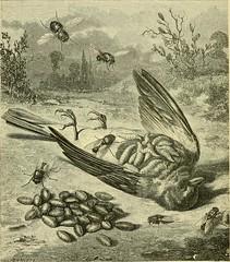 Anglų lietuvių žodynas. Žodis genus calliphora reiškia genties calliphora lietuviškai.