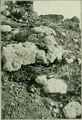 Anglų lietuvių žodynas. Žodis raoulia australis reiškia <li>raoulia australis</li> lietuviškai.