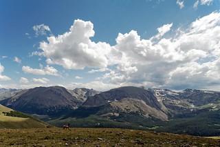 elk on the rocky mountain tundra.