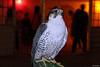 The Desert Eagle | Dubai Desert Safari | UAE (mohan_kumar_k) Tags: dubai uae safari deserteagle desertsafari