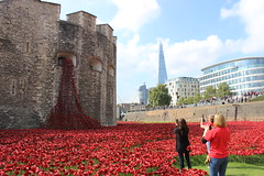 Volunteers who planted poppies taking photo's. (maggie jones.) Tags: red england london paul war poppy ww1 remembrance shard cummins