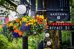 2014 - Vancouver - Hanging Out in Gastown (Ted's photos - For me & you) Tags: street flowers lamp sign vancouver flora nikon streetlight bokeh streetlamp photobook streetscene hanging gastown vignetting vancouverbc metrovancouver htt d600 carrallst vancouvercity cans2s tedsphotos nikonfx hanginbasket d600fx