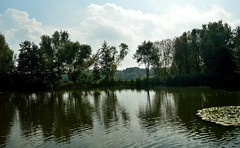 by the pond (velmethos) Tags: park autumn nature garden landscape see pond herbst natur dusseldorf dsseldorf landschaft garten sdpark nikond3200 d3200 sdparkdsseldorf