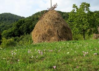 őszi kaszáló / autumn meadow