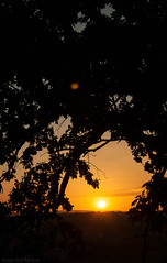 goodbye, summer! (rxndr) Tags: light sunset sun elm lastdayofholiday