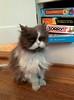 Grumpy cat (jhinn) Tags: cat portland grumpy