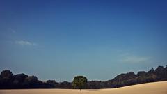 L'arbre qui cache la fort... (dono heneman) Tags: sky france tree nature rural forest pentax ciel terre cache paysage campagne arbre fort vegetal vgtation cacher paysdelaloire loireatlantique vgtal ruralit pentaxart larbrequicachelafort pentaxk3 belletire