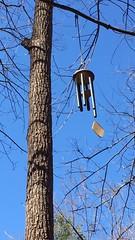 Park School woods ~ wind chime (karma (Karen)) Tags: parkschool pikesville maryland woods trees windchimes video iphone