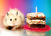 Happy 1.5 Birthday, Gucio! (pyza*) Tags: hamster hammie syrian syrianhamster animal pet rodent critter cute adorable fluffy monster birthday
