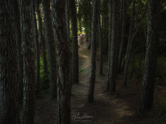 In to the narrows... (Almodovar Photography) Tags: narrows light tothelight pines forest pinos sendero puertorico