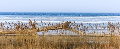 Nature's Layers (Wes Iversen) Tags: baycity baycitystaterecreationarea lakehuron michigan saginawbay grasses ice icy logs nature winter wintry tamron150600mm