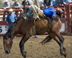 Stay tight.. (Algiers Photography) Tags: horse lake canada cold cowboy action alberta rodeo actionshot horserider coldlake