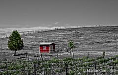Vineyard Shed (Walla Walla) (campmusa) Tags: landscape vineyard farm shed perennial wallawalla easternwashington nikonlens hardscape nikond7000
