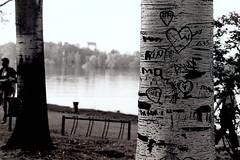 Tree's Memories (matteo_maifrini) Tags: park wood blackandwhite bw italy parco lake plant tree love film nature alberi writing lago 50mm italia heart fiume mantova letter arrow om albero cuore ilford fp4 amore biancoenero analogica legno analogic scritte pellicola om4 id11