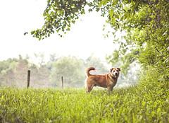 Berry Good (miss_n_arrow) Tags: bear dog black pose walking outdoors mix berry woods husky berries walk canine scene juneau raspberry pick trickster juju raspberries picking huskador