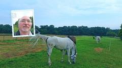 In touch (eagle1effi) Tags: horse caballo cheval flickr bestof photos samsung smartphone galaxy fotos cavallo cavalo pferd android app bestofflickr equus paard s5 evalo eagle1effi samsunggalaxys5 galaxys5 samsungsmg900f galaxys5bestof galaxydevine