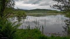 Peaceful Lake 2_2014 (frcrossnacreevy) Tags: argyll 40 beavers greatphotographers explored gününeniyisithebestofday lochcoillebharr greaterphotographers greatestphotographers ultimatephotographers olympusem5