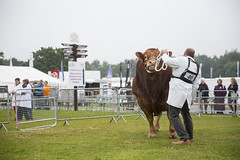 Kent_County_Show_2014_001