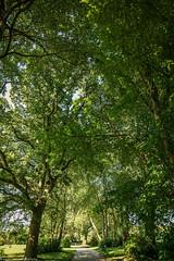 Canopy Of Trees (aaron_eos_photography) Tags: park trees summer sun lake tree nature leaves landscape leaf oak sony sunny foliage greenery aspen crimsonking norwaymaple parkscape lurganpark lightroom5 sonyslta77v sonydt1650mmf28ssm