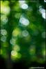rikenon50 bubbles at f1.4 (ChristianRock) Tags: nature garden 50mm pentax bokeh 50mmf14 rikenon ricoh50mmf14 rikenon50mmf14 k20d pentaxk20d rikenonxr50mmf14
