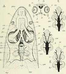 Anglų lietuvių žodynas. Žodis family characinidae reiškia šeimos characinidae lietuviškai.