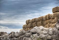 Lo fresco y lo marchito. (Huella4) Tags: field landscape wheat paisaje orchard colores nubes campo agriculture cereals cereales paja cultivation trigo huerta harvesting cultivo agricultura recoleccin balasdepaja huella4 conchireyes
