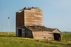 Bingo Grain Co. (nikons4me) Tags: old building abandoned overgrown southdakota decay elevator grain ghosttown damaged decaying tallgrass okaton nikonafsdxnikkor35mmf18g nikond7100 bingograinco