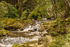 The Cascading Shimna River  ~  Explore 06/08/2014 (Pat Fox Photography) Tags: woodland northernireland cascade forestpark mournemountains tollymore canon30d shimnariver canon1585is