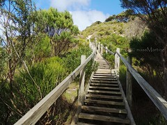 500 steps of Prospect Hill (massMartine) Tags: island hill australia lookout sa southaustralia kangaroos kangarooisland prospecthill