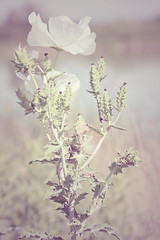 wednesday (moosebite) Tags: flower nature field weeds moosebite jrgoodwin