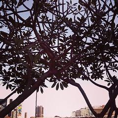 trees (Suzy Machado) Tags: trees cerrado arvores