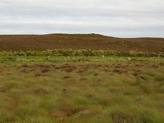 Camster: Flow Country landscape (green voyage (mostly away from computer, for a whi) Tags: autumn grass animals scotland walks afternoon sheep britain heather september highland wetlands moors bogs grasses heathers wetland moorland caithness flows camstercairns peatland camster peatbogs archaeologicalsites flowcountry greycairnsofcamster blanketbogs cairnsofcamster