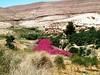 #tafileh#jordan#love#tours#الاردن#الطفيله#سياحه#حب (hassanallwama) Tags: love jordan tours حب الطفيله الاردن سياحه tafileh